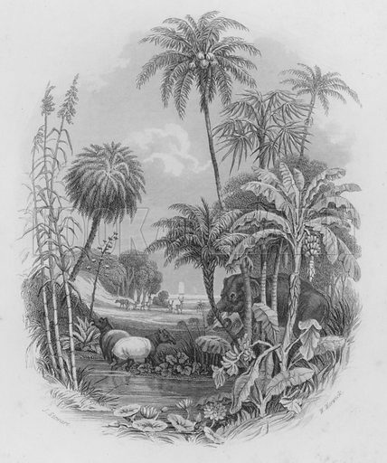 The Vegetable Kingdom. Illustration for A History of the Vegetable Kingdom by William Rhind (Blackie, 1855).