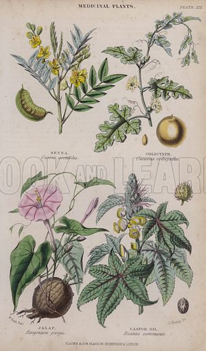 Senna; Colocynth; Jalap; Castor Oil. Illustration for A History of the Vegetable Kingdom by William Rhind (Blackie, 1855).