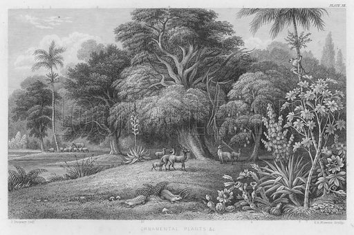 Ornamental Plants etc. Illustration for A History of the Vegetable Kingdom by William Rhind (Blackie, 1855).
