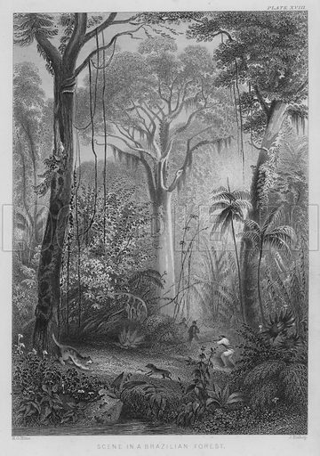 Scene in a Brazilian Forest. Illustration for A History of the Vegetable Kingdom by William Rhind (Blackie, 1855).