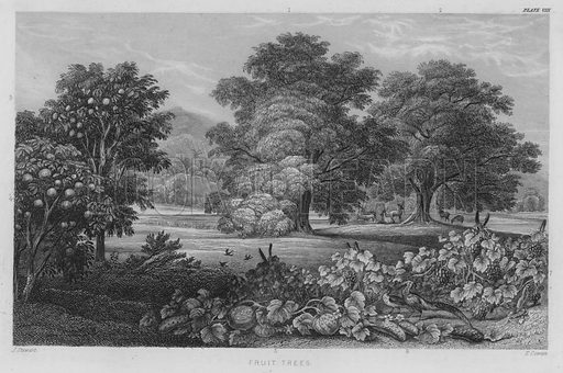Fruit Trees. Illustration for A History of the Vegetable Kingdom by William Rhind (Blackie, 1855).