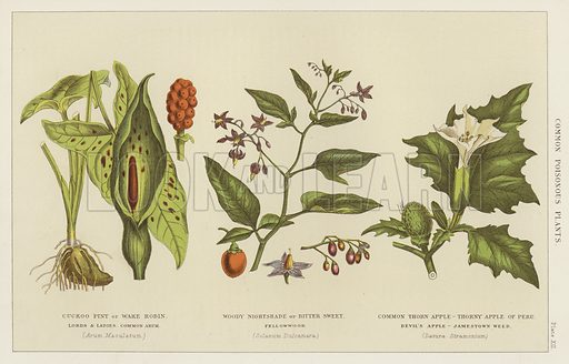 Common poisonous plants. Illustration for The Household Physician by J M'Gregor-Robertson (Blackie, c 1870).