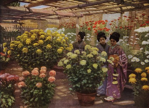 At the Chrysanthemum Show. Illustration for In Lotus-Land Japan by Herbert G Ponting (new and rev edn, 1922).