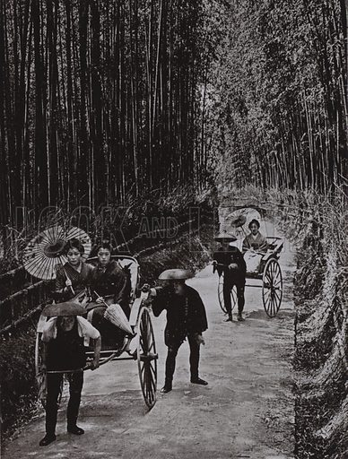 A Bamboo Avenue at Kyoto. Illustration for In Lotus-Land Japan by Herbert G Ponting (new and rev edn, 1922).