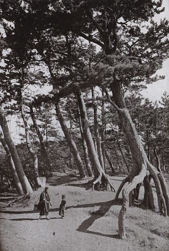 The Pines of Shizu-ura. Illustration for In Lotus-Land Japan by Herbert G Ponting (new and rev edn, 1922).