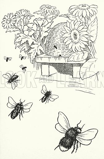 If the bees stay at home, / Rain will come soon; / If they fly away, / Fine will be the day. Illustration for A Little Book of Knowledge for Little-Folks illustrated by Percy Billinghurst (Sands, c 1910).