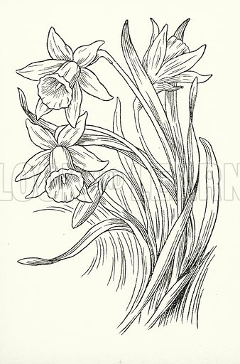 March brings the breezes loud and shrill, / Stirs the dancing daffodil. Illustration for A Little Book of Knowledge for Little-Folks illustrated by Percy Billinghurst (Sands, c 1910).