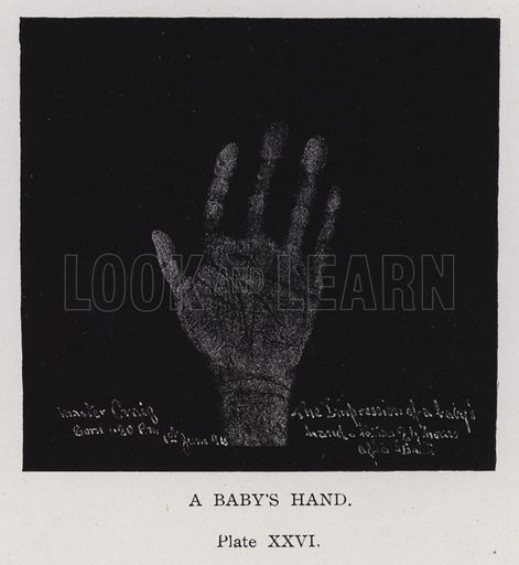 A baby's hand. Illustration for Cheiro's Language of the Hand (14th edn, Nichols, and Rand McNally, 1910).  This work was originally published in 1897. William John Warner (also known as Count Louis Hamon), popularly known as Cheiro (1866-1936) was an Irish astrologer and palmist.
