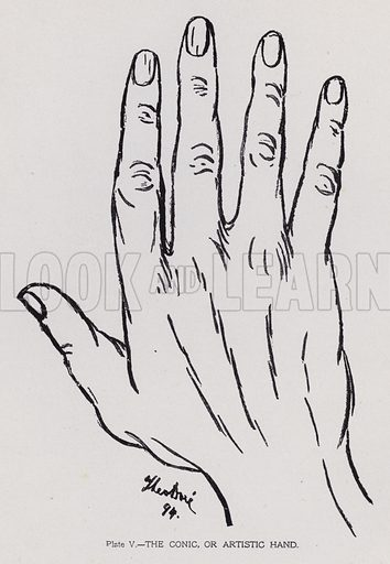 The conic, or artistic hand. Illustration for Cheiro's Language of the Hand (14th edn, Nichols, and Rand McNally, 1910).  This work was originally published in 1897. William John Warner (also known as Count Louis Hamon), popularly known as Cheiro (1866-1936) was an Irish astrologer and palmist.  Illustrations by Theo Dore.