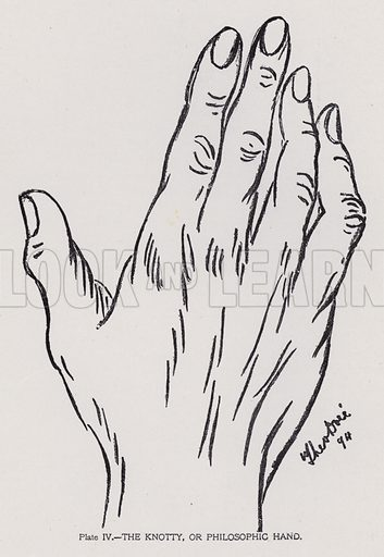 The knotty, or philosophic hand. Illustration for Cheiro's Language of the Hand (14th edn, Nichols, and Rand McNally, 1910).  This work was originally published in 1897. William John Warner (also known as Count Louis Hamon), popularly known as Cheiro (1866-1936) was an Irish astrologer and palmist.  Illustrations by Theo Dore.