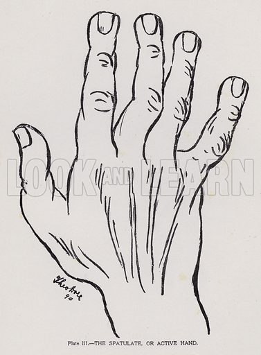 The spatulate, or active hand. Illustration for Cheiro