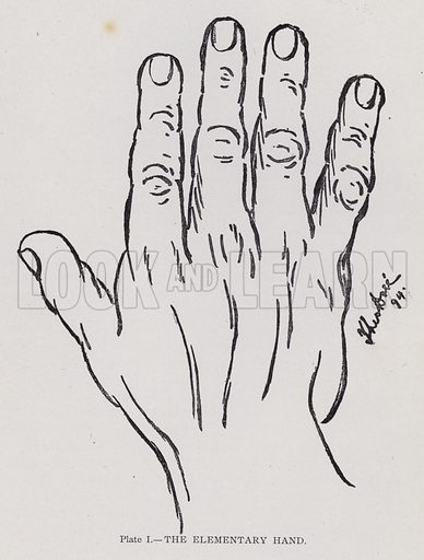 The elementary hand. Illustration for Cheiro's Language of the Hand (14th edn, Nichols, and Rand McNally, 1910).  This work was originally published in 1897. William John Warner (also known as Count Louis Hamon), popularly known as Cheiro (1866-1936) was an Irish astrologer and palmist.  Illustrations by Theo Dore.