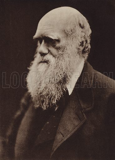 Charles Darwin. Illustration for Julia Margaret Cameron, her life and photographic work, by Helmut Gernsheim (Fountain Press, 1948).  Gravure printed.