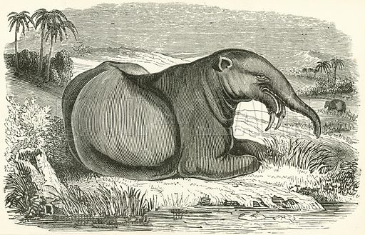 The Dinotherium. Illustration for Museum of Wonders Illustrated (D Omer Smith, c 1860).