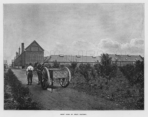 West view of fruit factory. Illustration for Orchards and Gardens Ancient and Modern, with a description of the Orchards, Gardens, Model Farms and Factories owned by Mr William Whiteley, of Westbourne Grove, London, by Alfred Barnard (London, 1895).