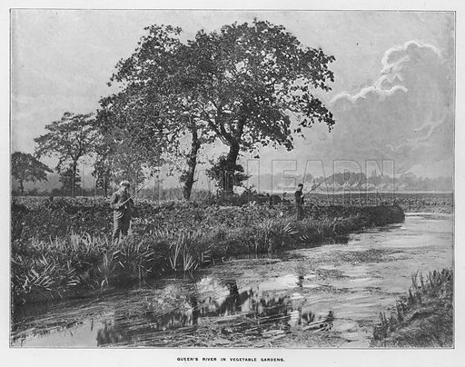 Queen's River in vegetable gardens. Illustration for Orchards and Gardens Ancient and Modern, with a description of the Orchards, Gardens, Model Farms and Factories owned by Mr William Whiteley, of Westbourne Grove, London, by Alfred Barnard (London, 1895).
