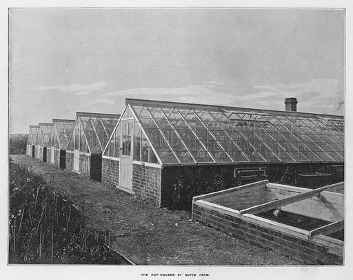 The hot-houses at Butts Farm. Illustration for Orchards and Gardens Ancient and Modern, with a description of the Orchards, Gardens, Model Farms and Factories owned by Mr William Whiteley, of Westbourne Grove, London, by Alfred Barnard (London, 1895).