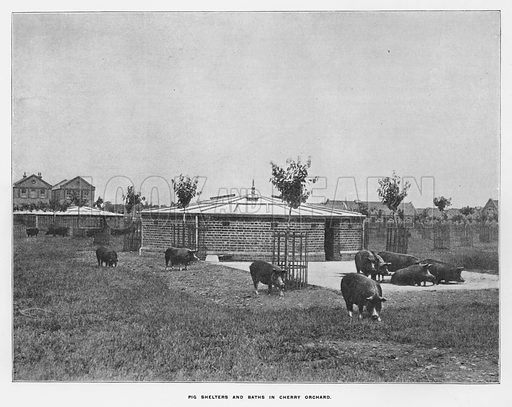 Pig shelters and baths in cherry orchard. Illustration for Orchards and Gardens Ancient and Modern, with a description of the Orchards, Gardens, Model Farms and Factories owned by Mr William Whiteley, of Westbourne Grove, London, by Alfred Barnard (London, 1895).
