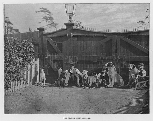 Dogs resting after exercise. Illustration for Orchards and Gardens Ancient and Modern, with a description of the Orchards, Gardens, Model Farms and Factories owned by Mr William Whiteley, of Westbourne Grove, London, by Alfred Barnard (London, 1895).