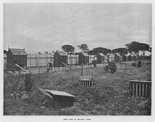 West side of poultry farm. Illustration for Orchards and Gardens Ancient and Modern, with a description of the Orchards, Gardens, Model Farms and Factories owned by Mr William Whiteley, of Westbourne Grove, London, by Alfred Barnard (London, 1895).