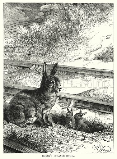 Bunny's strange home. Illustration for Our Picture Book (S W Partridge, c 1870).