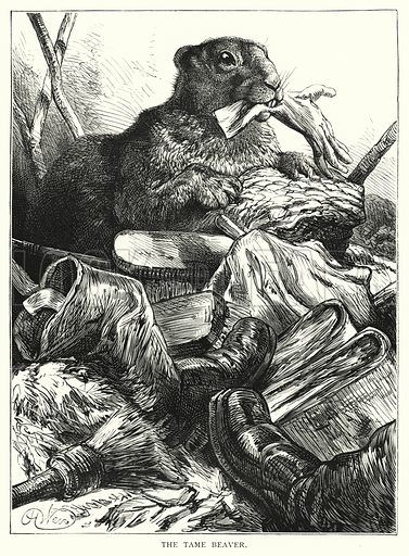 The tame beaver. Illustration for Our Picture Book (S W Partridge, c 1870).