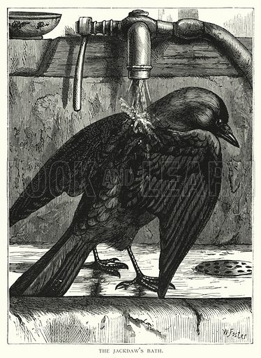 The jackdaw's bath. Illustration for Our Picture Book (S W Partridge, c 1870).