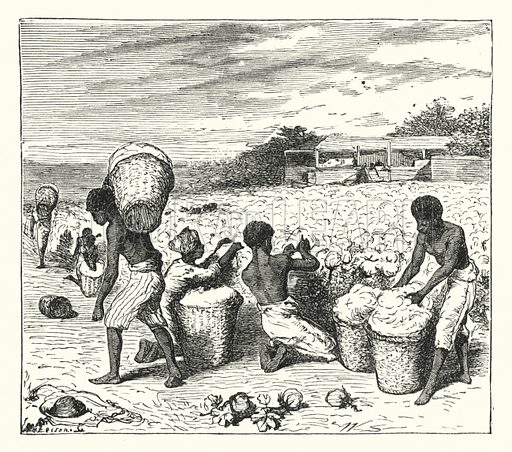Gathering cotton. Illustration for Our Parlour Panorama by Mrs George Cupples (T Nelson, 1882).