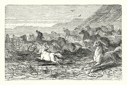 Wild horses. Illustration for Our Parlour Panorama by Mrs George Cupples (T Nelson, 1882).