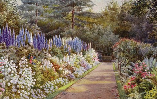 Delphiniums and Campanulas in Stately Spires