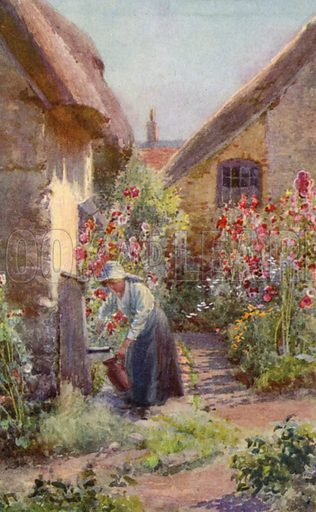 Hollyhocks in a Cottage Garden. Illustration for Hardy Perennials and Herbaceous Borders by Walter P Wright (Swarthmore, 1912).
