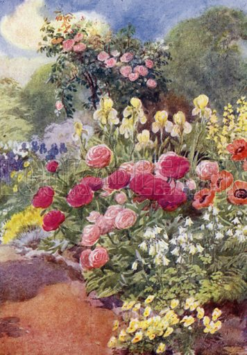 Paeonies, with Columbines, Yellow Irises, and Thermopsis