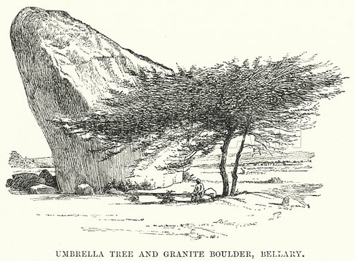 Umbrella Tree and Granite Boulder, Bellary. Illustration for Picturesque India, A Handbook for European Travellers (George Routledge, 1898).  Illustrations drawn by John Pedder (1850-1929), H Sheppard Dale (1852-1921), and H H Stanton (fl 1880-1905).