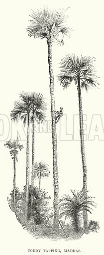 Toddy Tapping, Madras. Illustration for Picturesque India, A Handbook for European Travellers (George Routledge, 1898).  Illustrations drawn by John Pedder (1850-1929), H Sheppard Dale (1852-1921), and H H Stanton (fl 1880-1905).