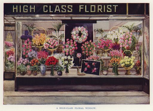 A high-class floral window. Illustration for The Practical Fruiterer and Florist edited by W B Shearn (George Newnes, 1935).
