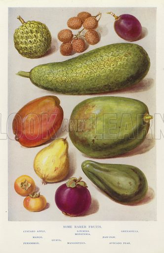 Some rarer fruits. Illustration for The Practical Fruiterer and Florist edited by W B Shearn (George Newnes, 1935).