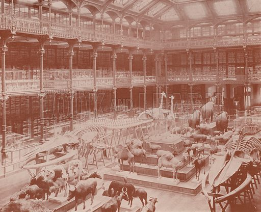 """The Museum of Natural History. Illustration for Beautiful Paris with over 400 views taken by Mr A Pepper, Official Photographer of the French Government, with introduction by J W Buel (Arkell Weekly, 1894).  No further info found on """"Mr A Pepper""""."""