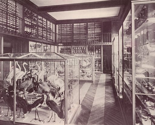 """Gallery of Birds, Museum of Natural History. Illustration for Beautiful Paris with over 400 views taken by Mr A Pepper, Official Photographer of the French Government, with introduction by J W Buel (Arkell Weekly, 1894).  No further info found on """"Mr A Pepper""""."""