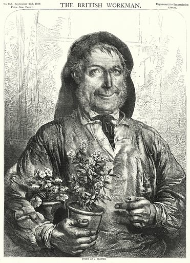 Story of a Flower. Illustration for The British Workman, 2 September 1867.