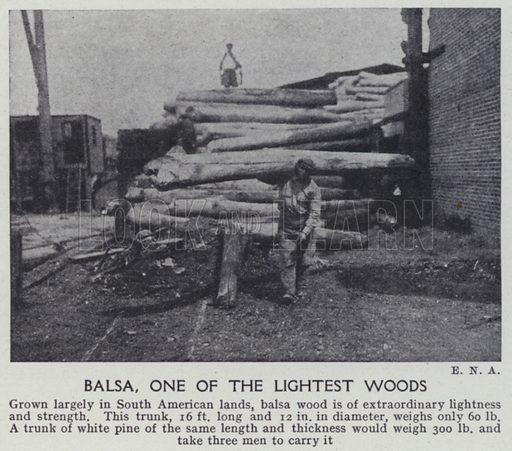 Balsa, one of the lightest woods. Illustration for Harmsworth's Business Encyclopedia and Commercial Educator (c 1926).