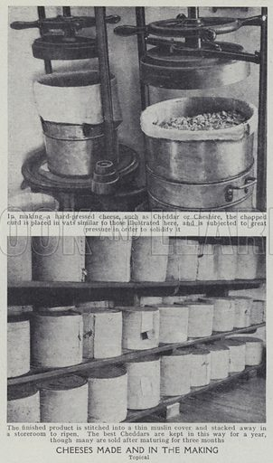 Cheeses made and in the making. Illustration for Harmsworth's Business Encyclopedia and Commercial Educator (c 1926).