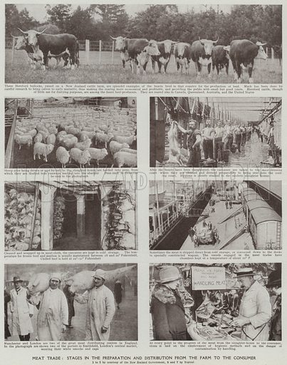Meat trade, Stages in the preparation and distribution from the farm to the consumer. Illustration for Harmsworth's Business Encyclopedia and Commercial Educator (c 1926).