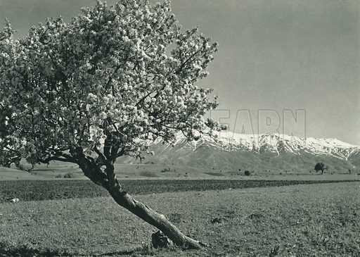 Kar ve bahar, Malatya, Spring and Winter Scenes near Malatya. Illustration for Fotografla Turkiye [ie Turkey in Pictures] published by The General Direction of The Press, Ankara, c 1930.  Photographs provided by Orthmar Pferschy (1898-1984).  It is not clear whether or not all the photos are by Pferschy, or whether or not the copyright was acquired by the State.  Gravure printed.