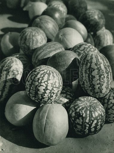Karpuzlar, Water-Melons. Illustration for Fotografla Turkiye [ie Turkey in Pictures] published by The General Direction of The Press, Ankara, c 1930.  Photographs provided by Orthmar Pferschy (1898-1984).  It is not clear whether or not all the photos are by Pferschy, or whether or not the copyright was acquired by the State.  Gravure printed.