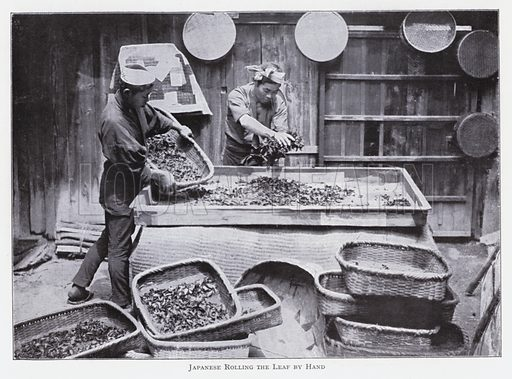 Japanese rolling the leaf by hand. Illustration for The Raw Materials of Commerce by J Henry Vanstone (Pitman, 1929).