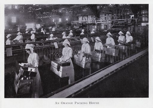 An orange packing house. Illustration for The Raw Materials of Commerce by J Henry Vanstone (Pitman, 1929).