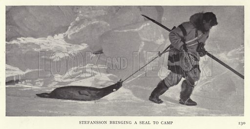 Stefansson bringing a seal to camp. Illustration for Heroes of Modern Adventure by T C Bridges and H Hessell Tiltman (Harrap, 1927).