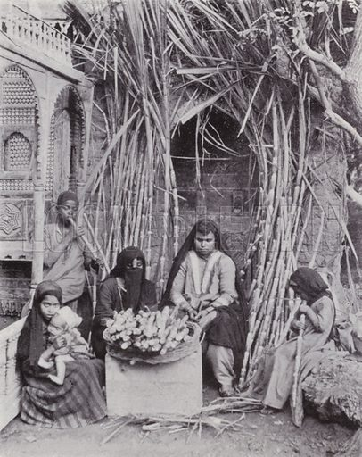 Sugar-Cane Sellers. Illustration for Souvenir of Egypt (George Ch Dovas, 1898).
