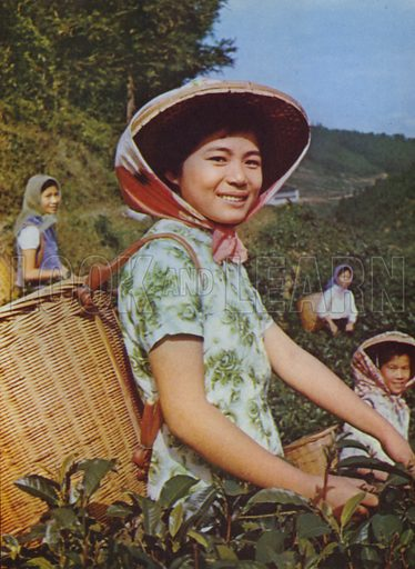 Girls picking tea leaves, 1963. Illustration for Appointment Diary of the Republic of China (ie Taiwan) issued by the Government Information Office, published by the Free China Review Press.