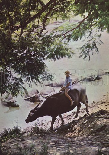Boy riding buffalo, 1959. Illustration for Appointment Diary of the Republic of China (ie Taiwan) issued by the Government Information Office, published by the Free China Review Press.
